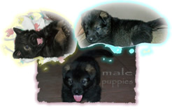 Male pups